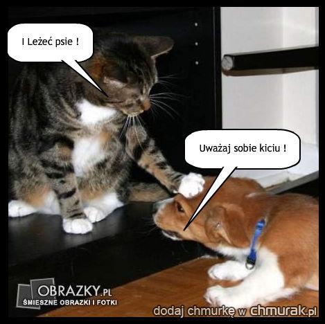 Pies i kotek :d