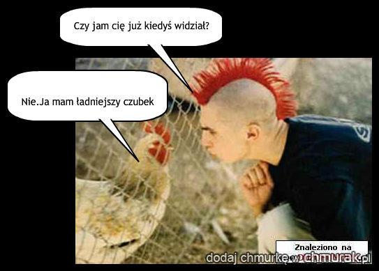 Kura zaprzeczy;)
