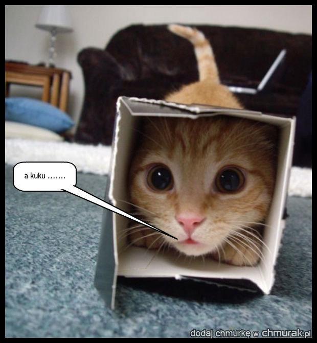 Kot we wszystkim znajdzie zabawkę....