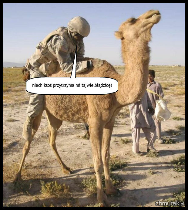 żołnierz gwałci wielbłąda