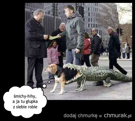 zjedzony przez aligatora