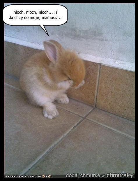 zagubiony królik