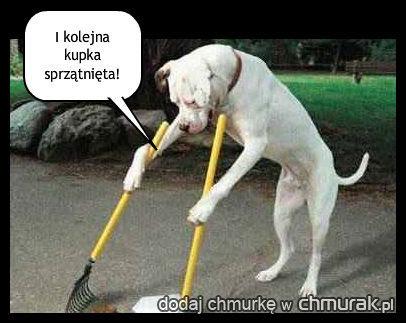 Dobry pies!
