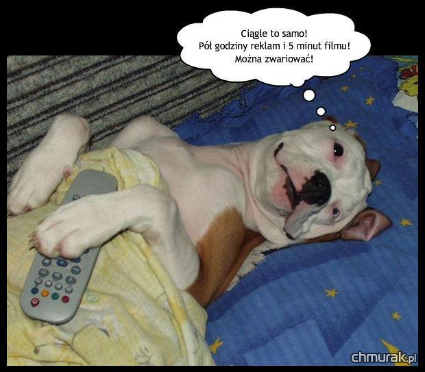 Pies czeka na film