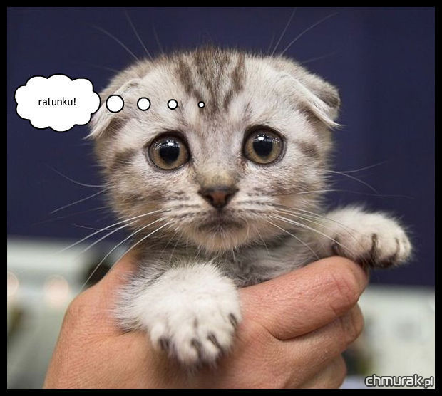 kotek w opałach
