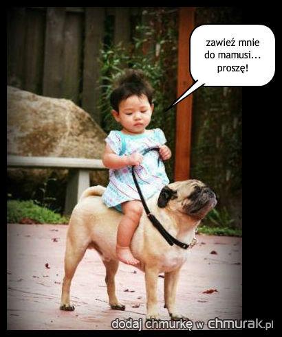 psia taksówka