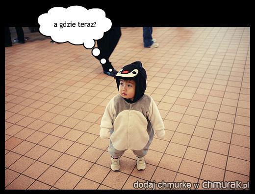 zagubiony pingwin