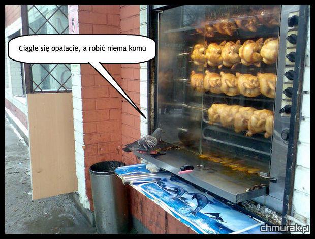 opalające się kury