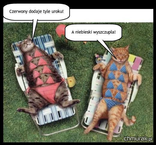 Koty na leżakach