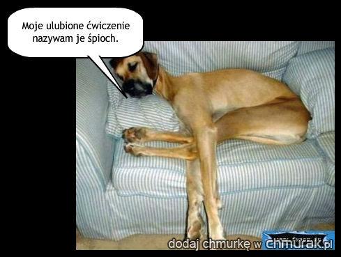 czteronożny przyjaciel psa