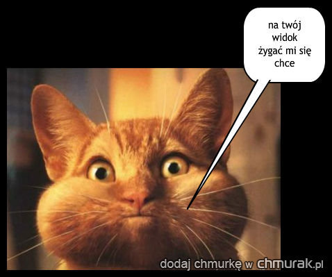 kot wymiotuje