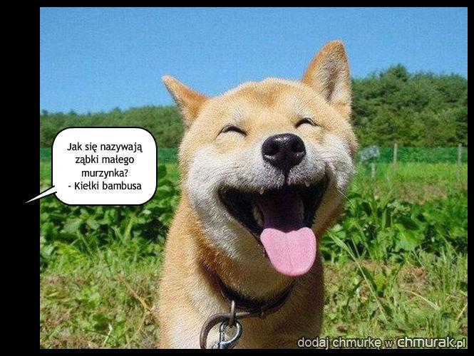 Śmiechawka
