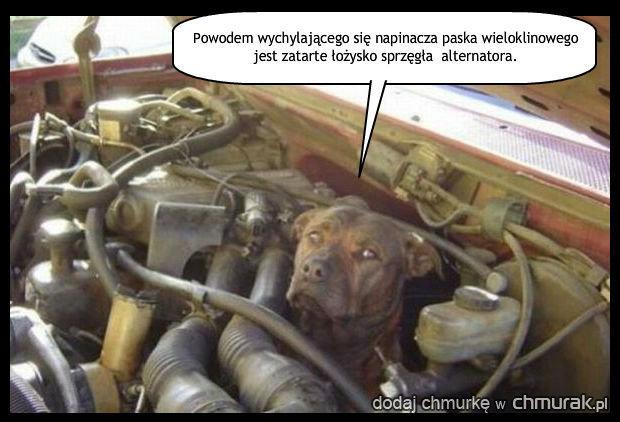 Psi mechanik