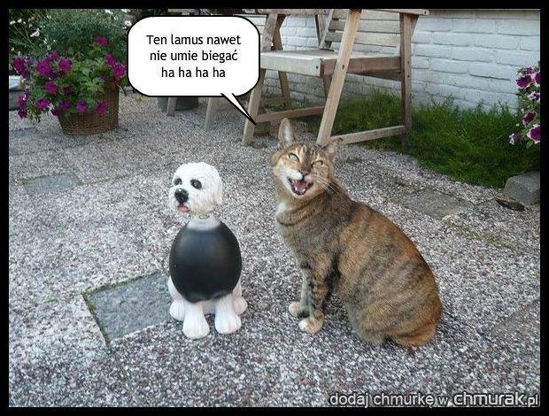 Kot szyderca