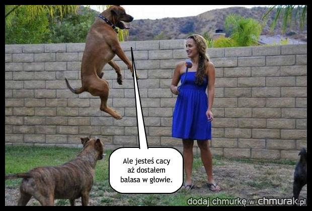 Psia zajawka
