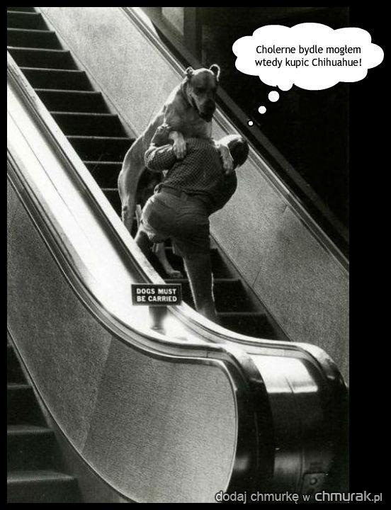 Jeśli też siłujesz się z psem na ruchomych schodach wklej to na Fejsa