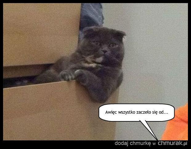 Kot Wiesław jest gotowy wysłuchać Twojej opowieści z wakacji