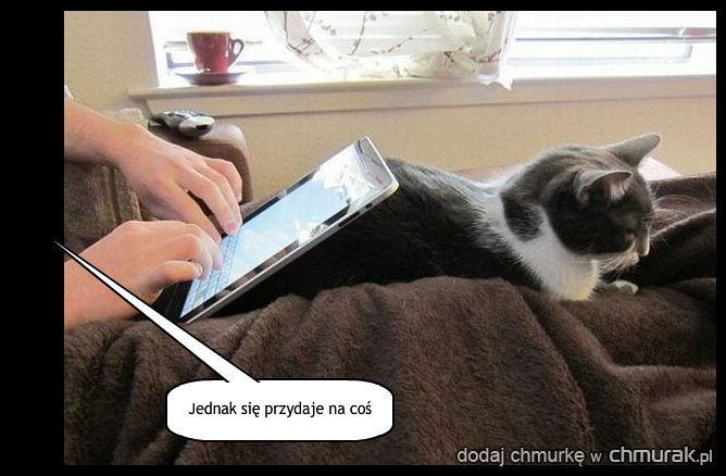 Obowiązki kota ewulowały wraz zaniknięciem myszy w domostwach