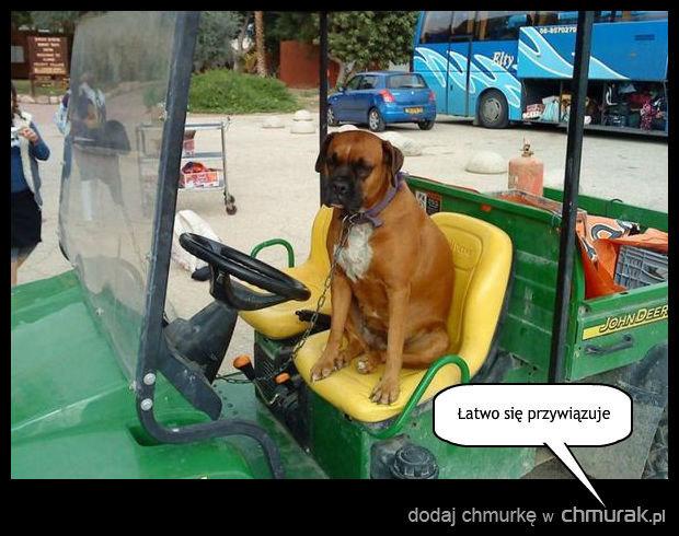 Ten pies ma jedną wielką zaletę...