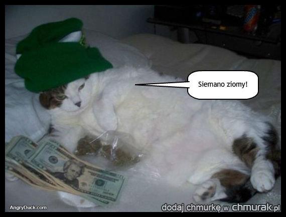 NIe będziemy wam owijać w bawełne - ten kot zarabia na życie sprzedając towar