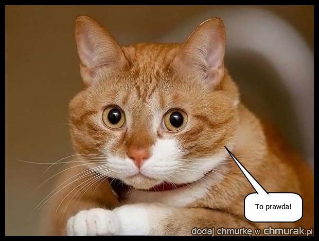 Kot Zdzisław jest oburzony Twoją naciąganą trójczyną z Plastyki