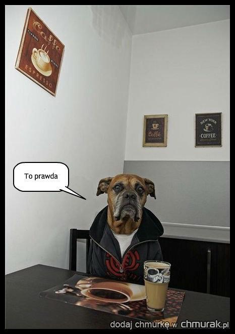 Pies Witold jest zniesmaczony twoim brakiem wiedzy na temat homonta