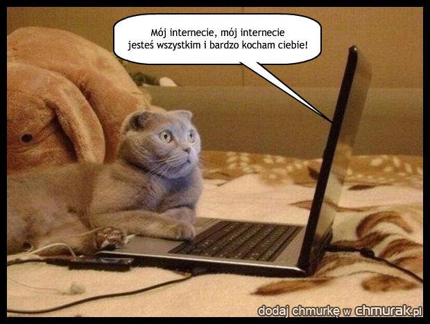 Kot który ogląda przebój Gracjana Roztockiego