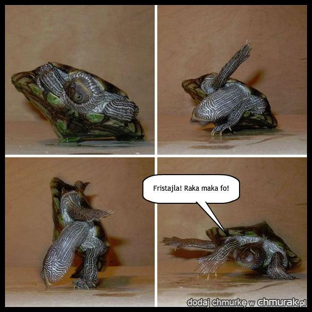 Mój żółw umie tańczyć breakdance\'a