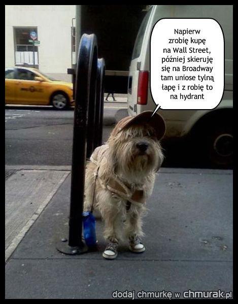 Pies podróżnik Mieczysław jest tym razem w Nowym Jorku