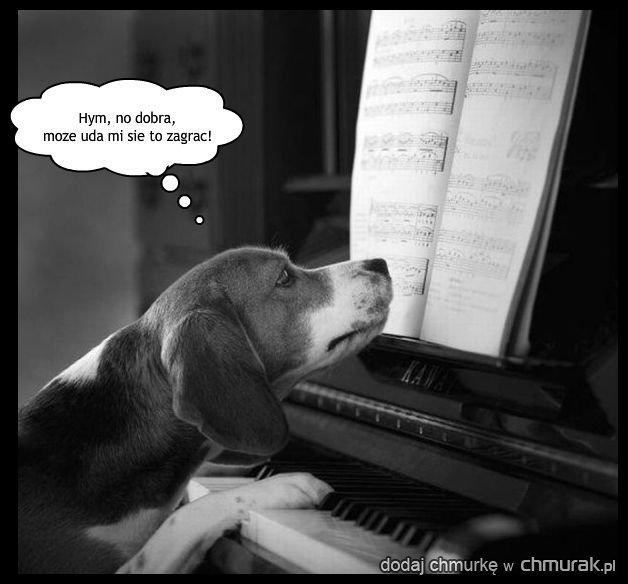 Muzyczny piesek.