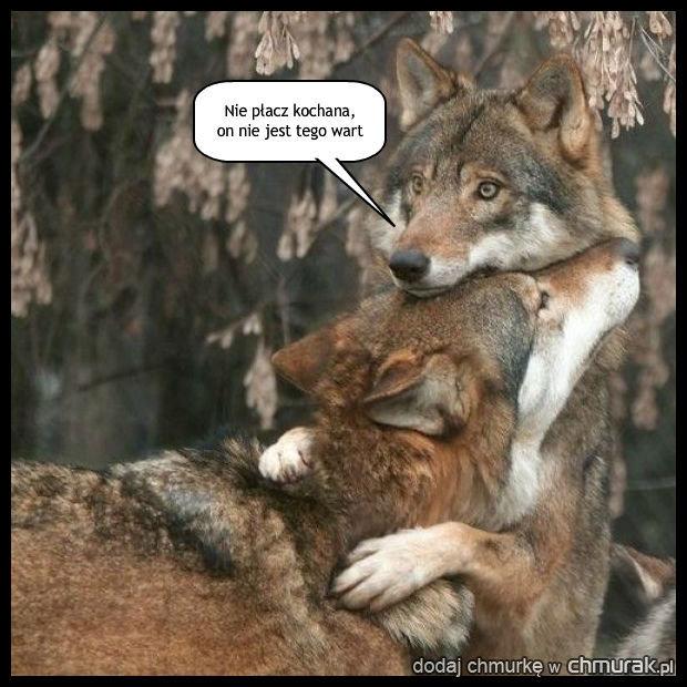 Człowiek człowiekowi jest wilkiem