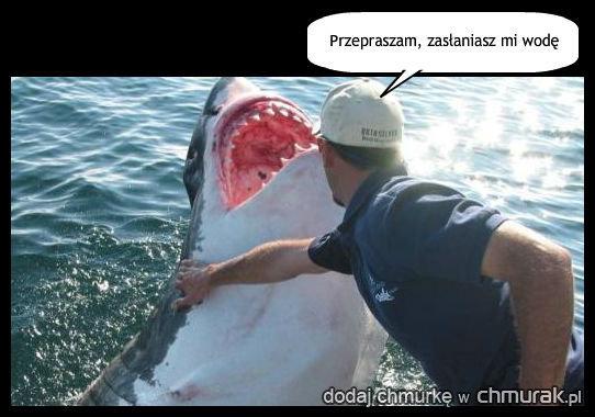Niegrzeczny rekin na prawda e mamy mieszne for Dream about fish