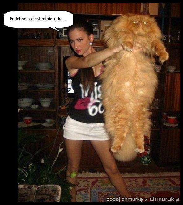 Kupilam sobie kota...