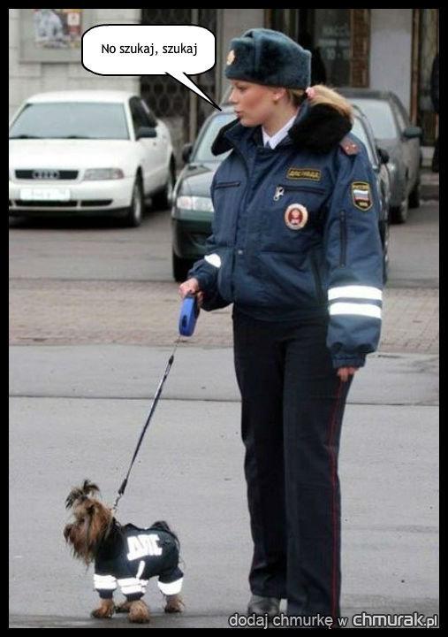 Pies tropiący w Rosji