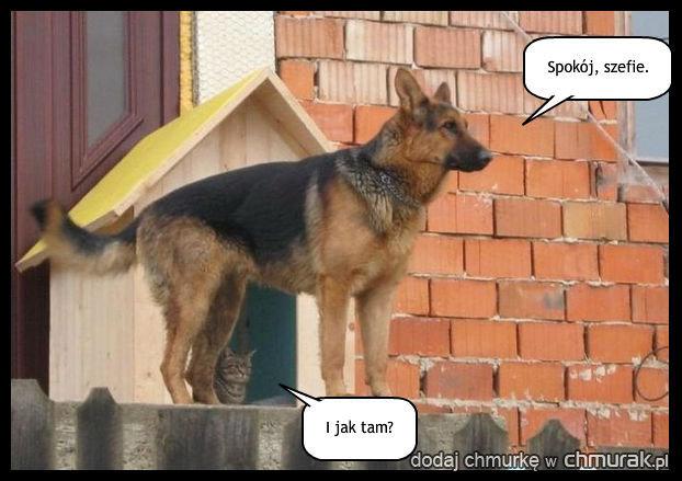 Ochroniarz kota.