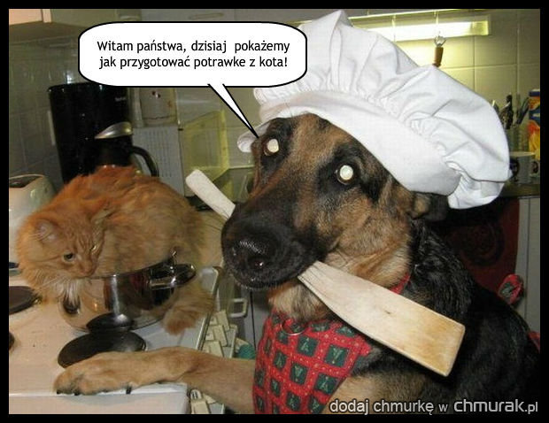 Program kulinarny dla psów.
