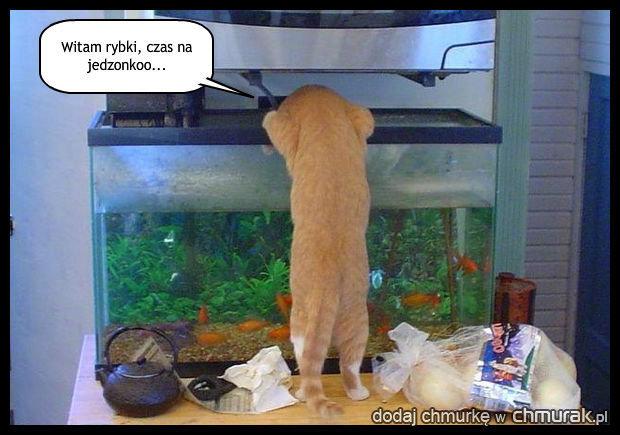 Głodny kotek