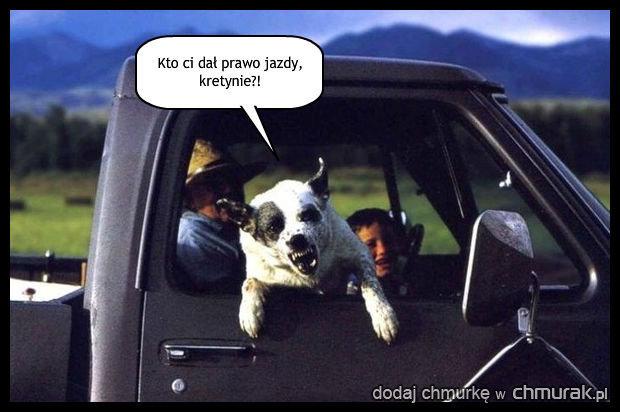 Zirytowany pies