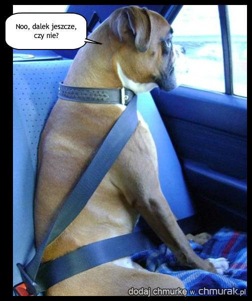 Niecierpliwy pasażer