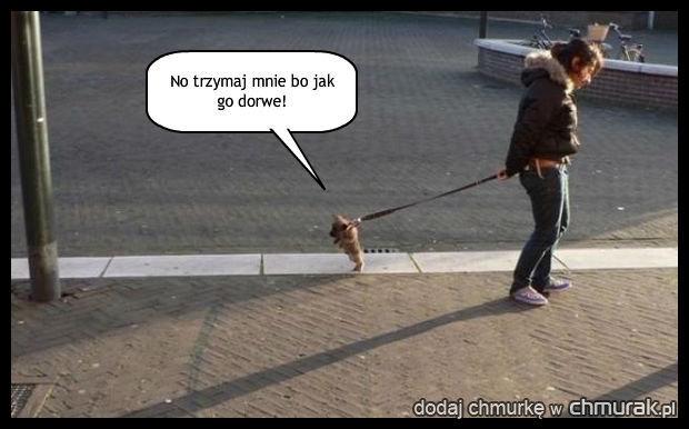 Mały kozak
