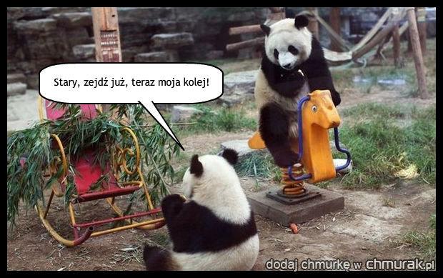 Panda też dziecko