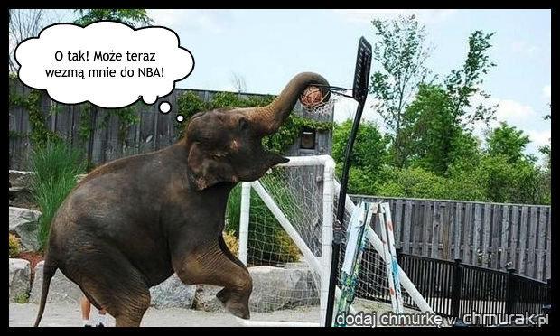 Słoń z marzeniami