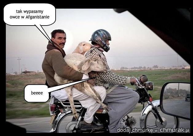 tak wypasamy  owce w Afganistanie