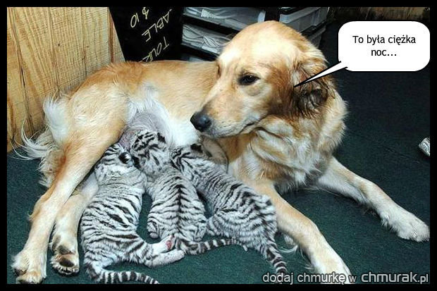 Kto jest ojcem?
