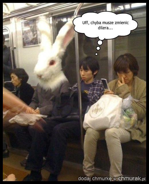 Królik w metrze?