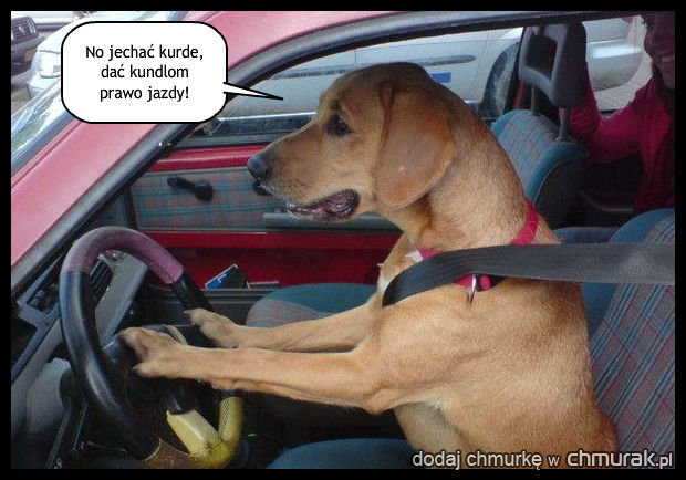 Rasowy kierowca