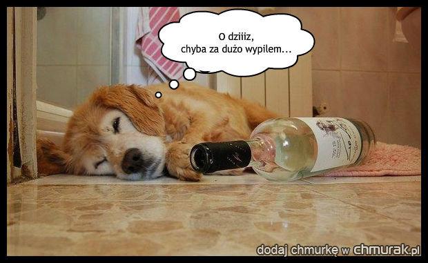 Pijaczek