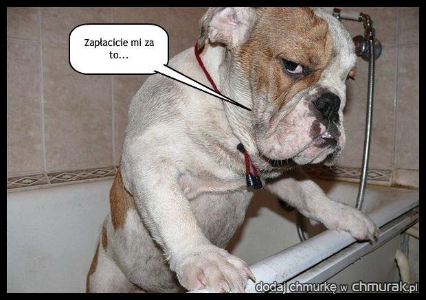 Bardzo nie lubi kąpieli...