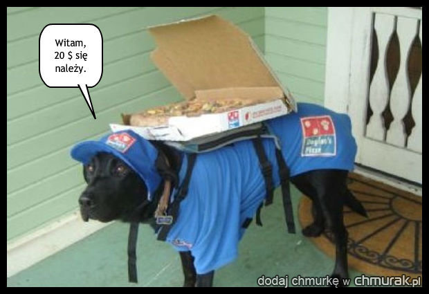 Pies-dostawca