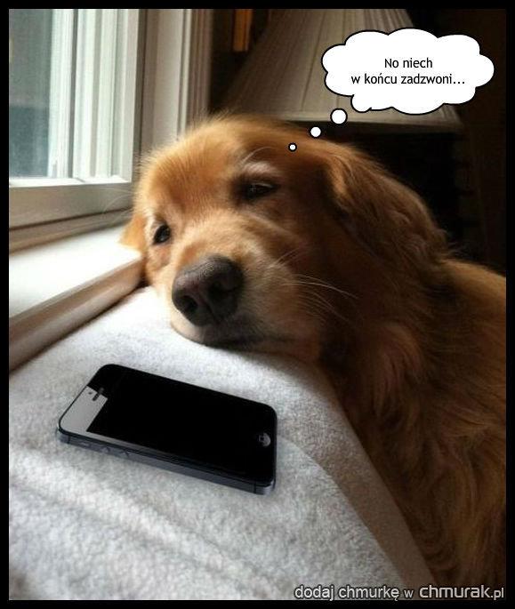 Czeka na telefon od ukochanej